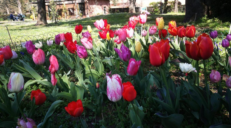 Inizio di Primavera a Pantano