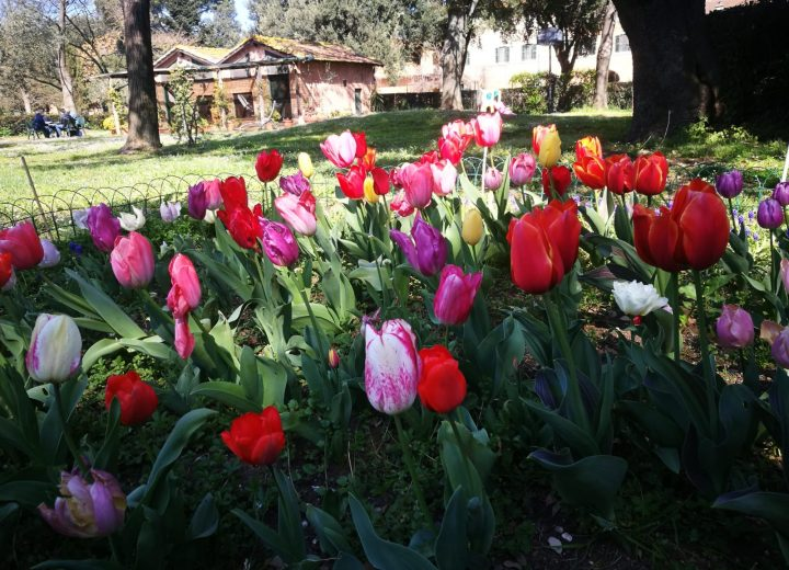 Beginning of Spring in Pantano